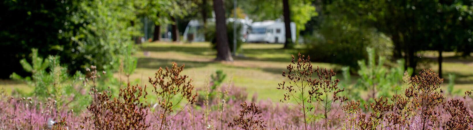 Naturcamping Lüneburger Heide - Campingplatz